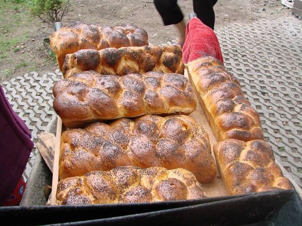 История происхождения хлеба